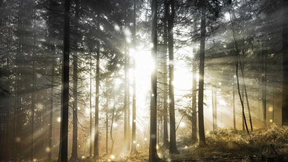 Eurobarometer: izguba biotske raznovrstnosti skrbi Evropejce