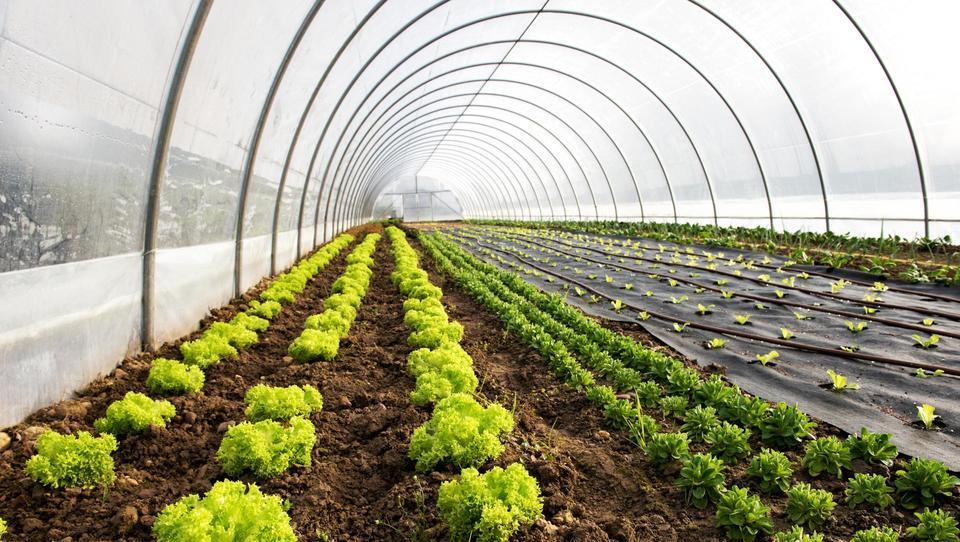 Zakaj kmetje nočejo graditi rastlinjakov in se odpovedujejo nepovratnim sredstvom