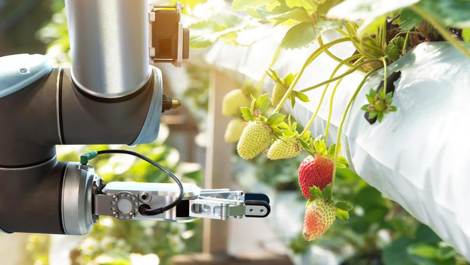 Brez robotov ni sodobnega kmetijstva