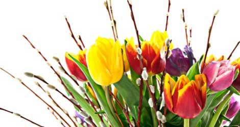 Rezultat iskanja slik za spomladanske rože
