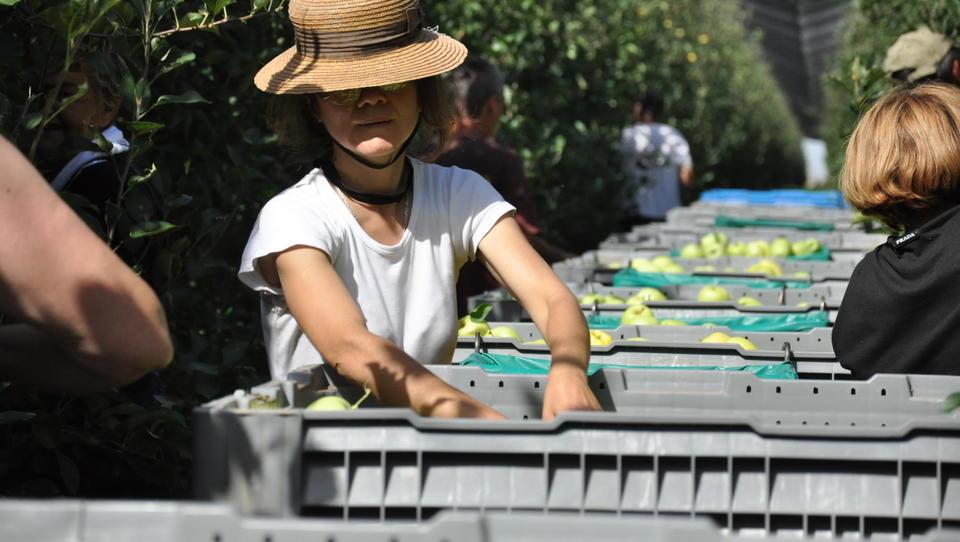 Delta Agrar jabolka goji enako kot južni Tirolci