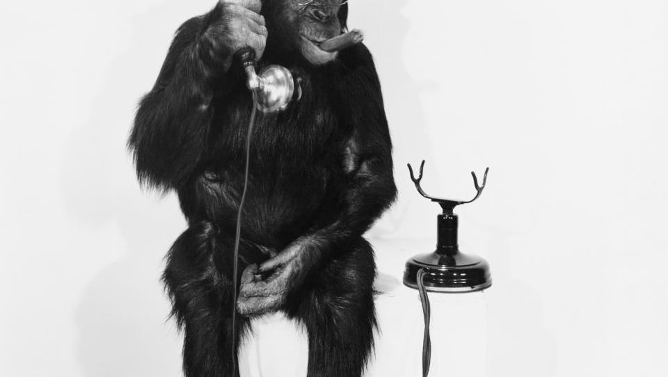 Kam z denarjem  v letu opice? Razkrivamo  napovedi  27 borznikov!