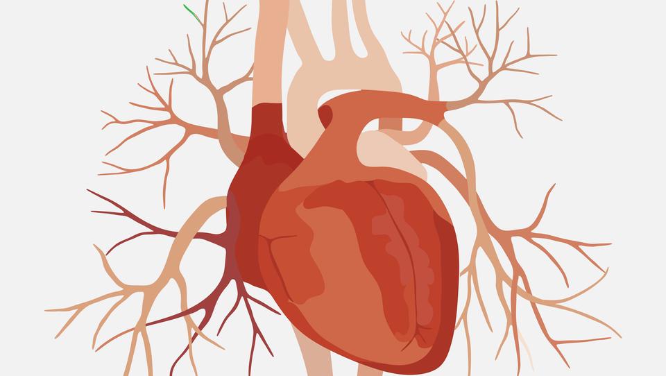 Kje smo pri študijah srčno-žilne varnosti?