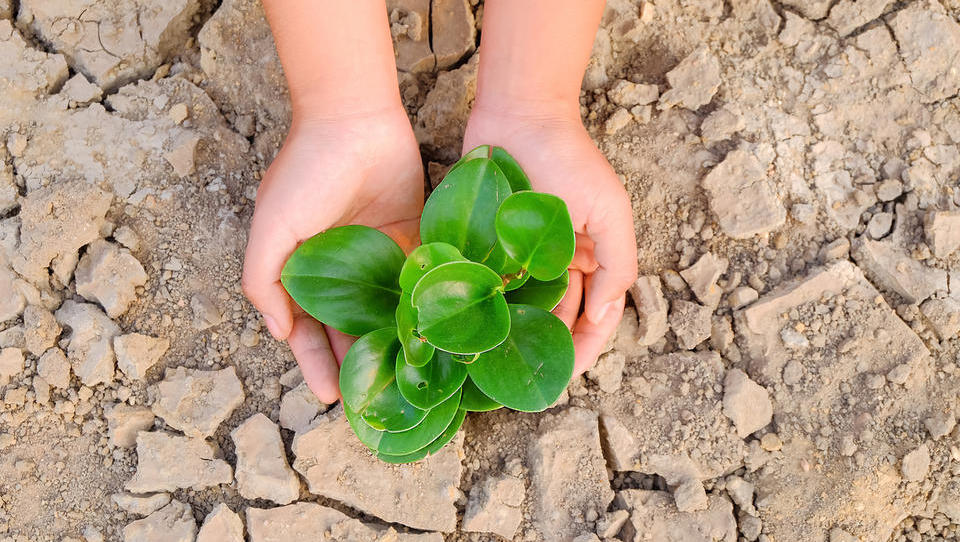 Znanstveniki imajo rešitev za boljše preživetje rastlin v suši