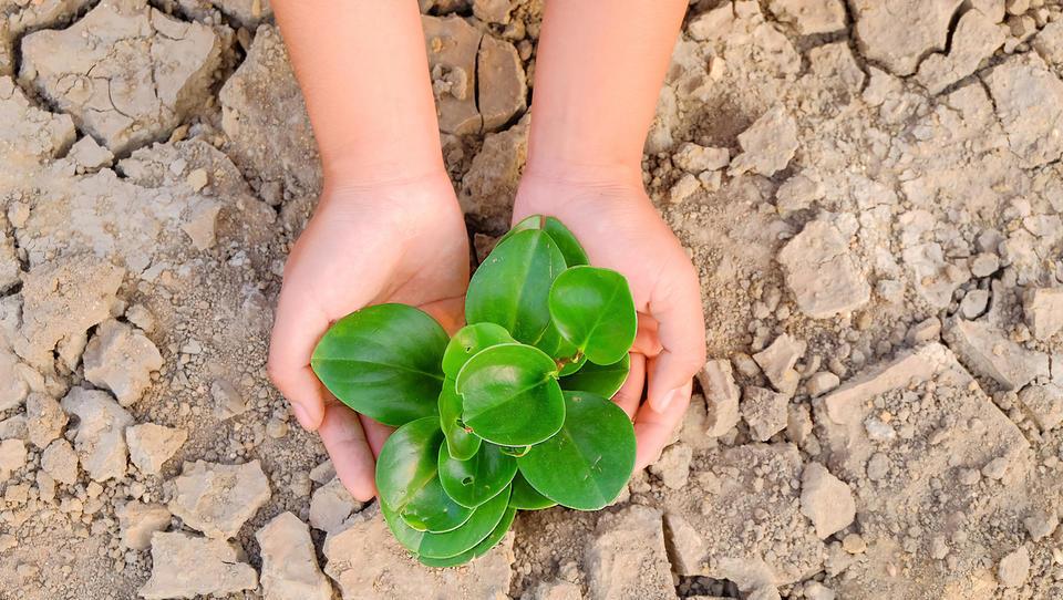 Poljska in Švedska našli milijone za kmete, ki jih je prizadela suša