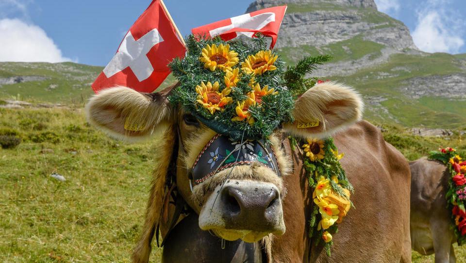 Švica se odpira: tako jasno komunicira država