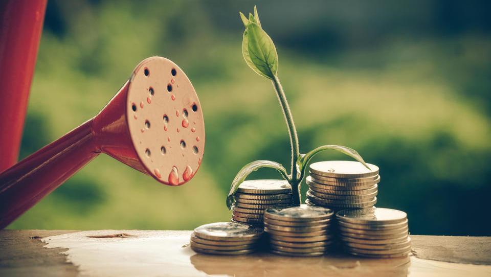 Nove bilance razkrivajo, kako so lani cvetela mlada podjetja