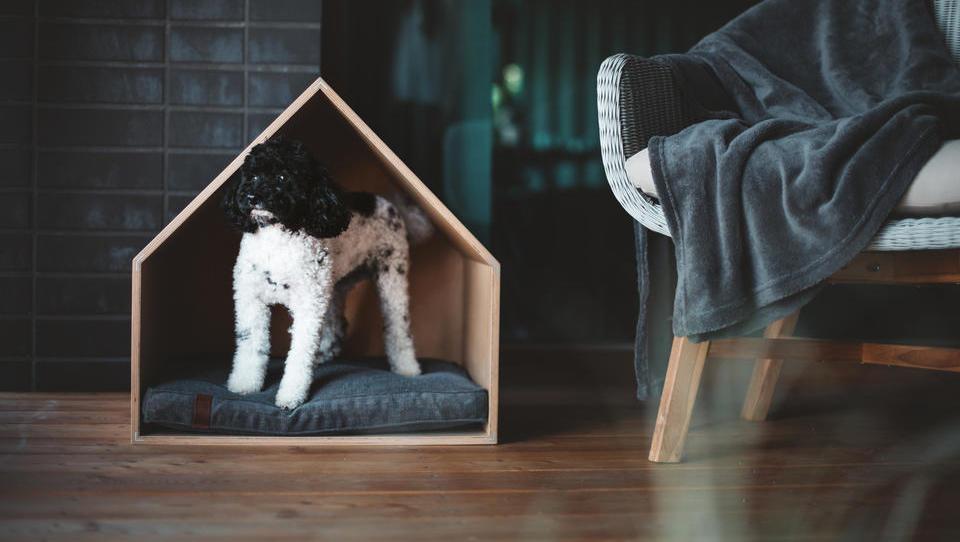 Najpodjetniška ideja: sodobno pohištvo za hišne ljubljenčke