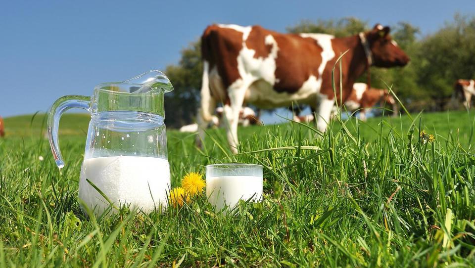 Zaradi karantene v Italiji obstal izvoz 150 tisoč litrov slovenskega mleka na dan
