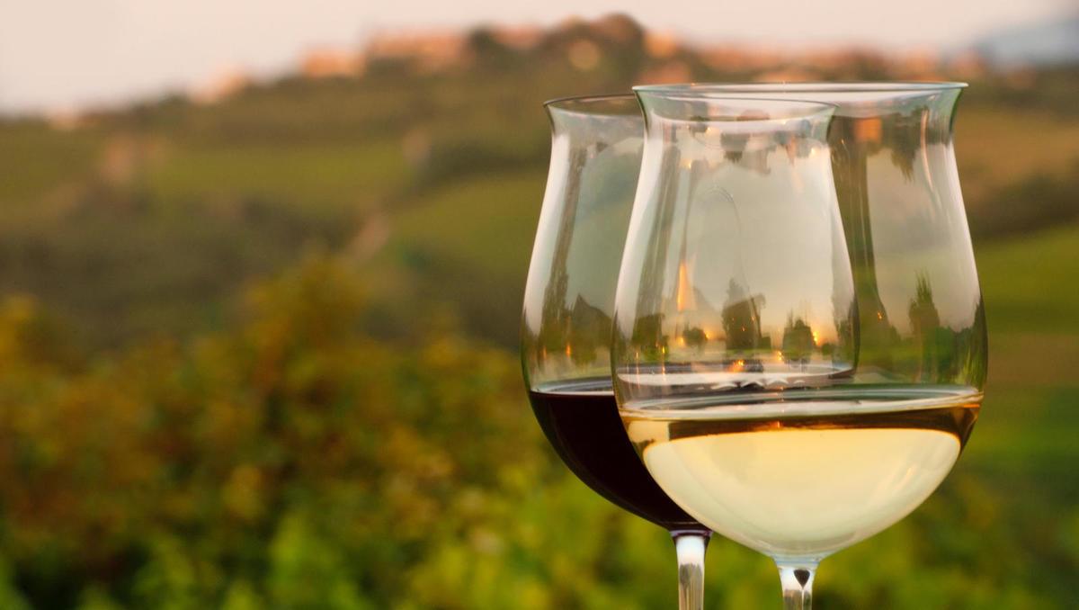 Kolumna: Zakaj ne bi zaščitili vrhunskih vinogradniških leg?