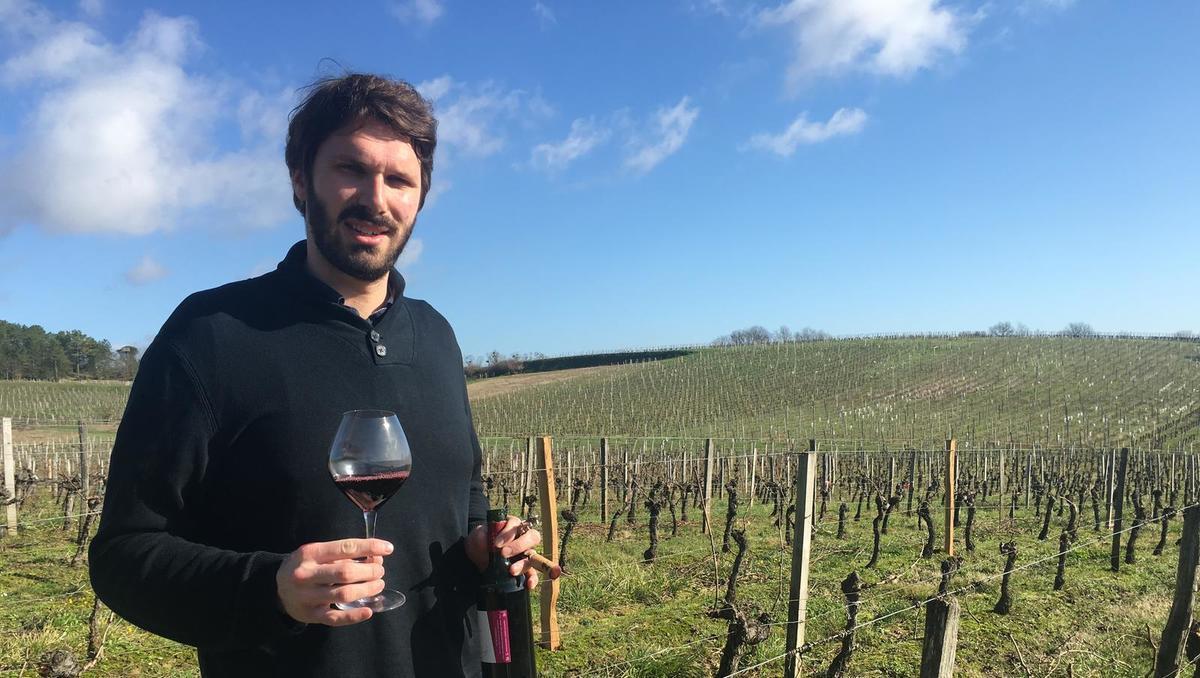 Kolumna Guillauma Antalicka: Prihodnost slovenskega vinarstva