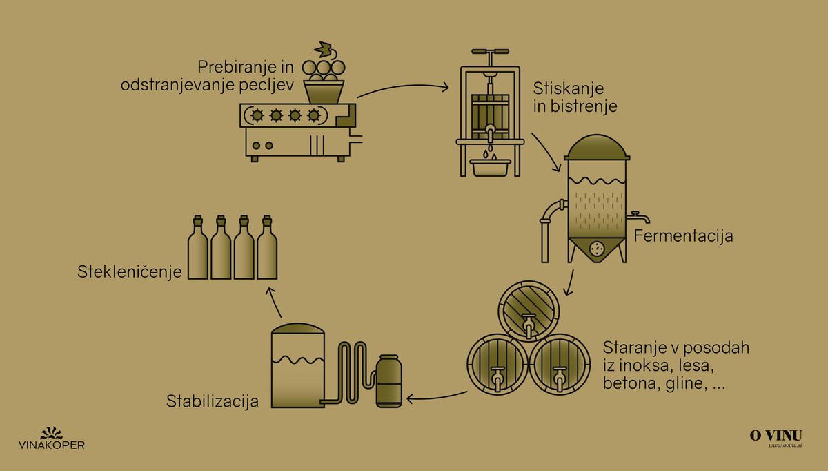 Kako nastane vino: tokrat o barvi vina in njegovi pridelavi