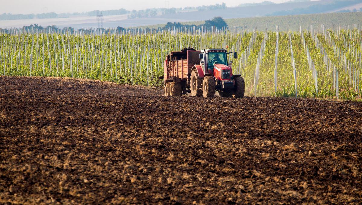 Od zemlje do vina: Trta je skromna rastlina, ki ne potrebuje veliko hranil
